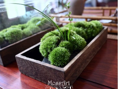Moss Table Garden Kit: Wood Tray + Hymolonᵀᴹ Fabric base + Transparent cover for Fairy Garden, Miniature, Bonsai, Micro Landscape, terrarium
