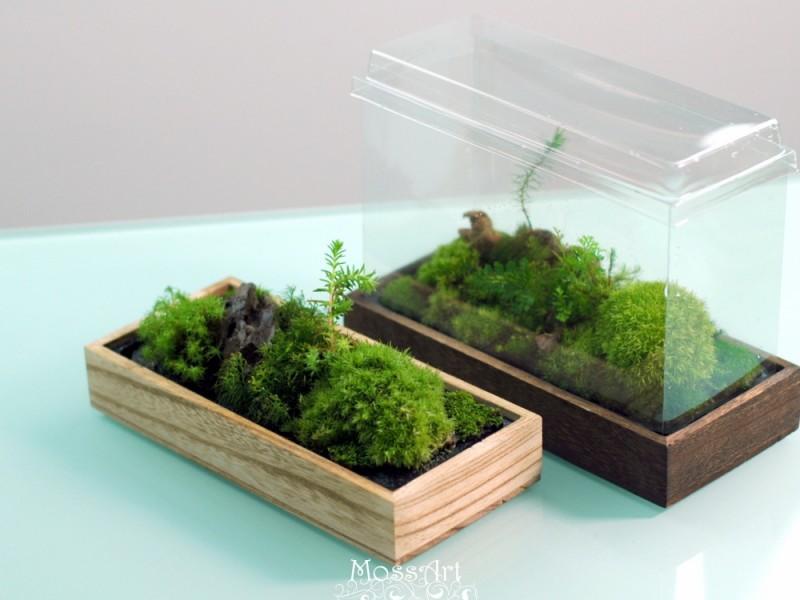 Moss Table Garden Kit: Wood Tray + Hymolonᵀᴹ Fabric base + Transparent cover for Fairy Garden, Miniature, Bonsai, Micro Landscape, terrarium