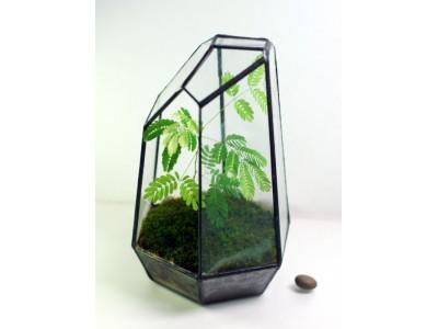 17 Surfaces Glass Geometric Terrarium Garden for Tillandsia Succulents Moss dry flower