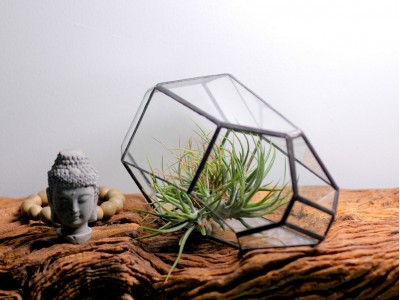 17 Surfaces Glass Geometric Terrarium Garden for Tillandsia Succulents Moss dry flower
