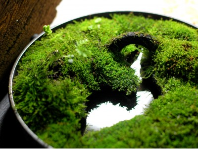 Hymolonᵀᴹ Moss Fabric base
