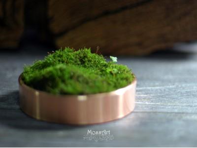 Hymolonᵀᴹ Moss Base